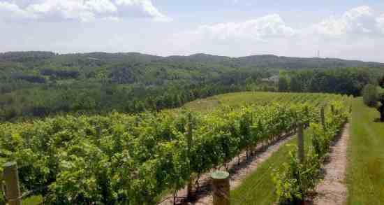 forty five north vineyard
