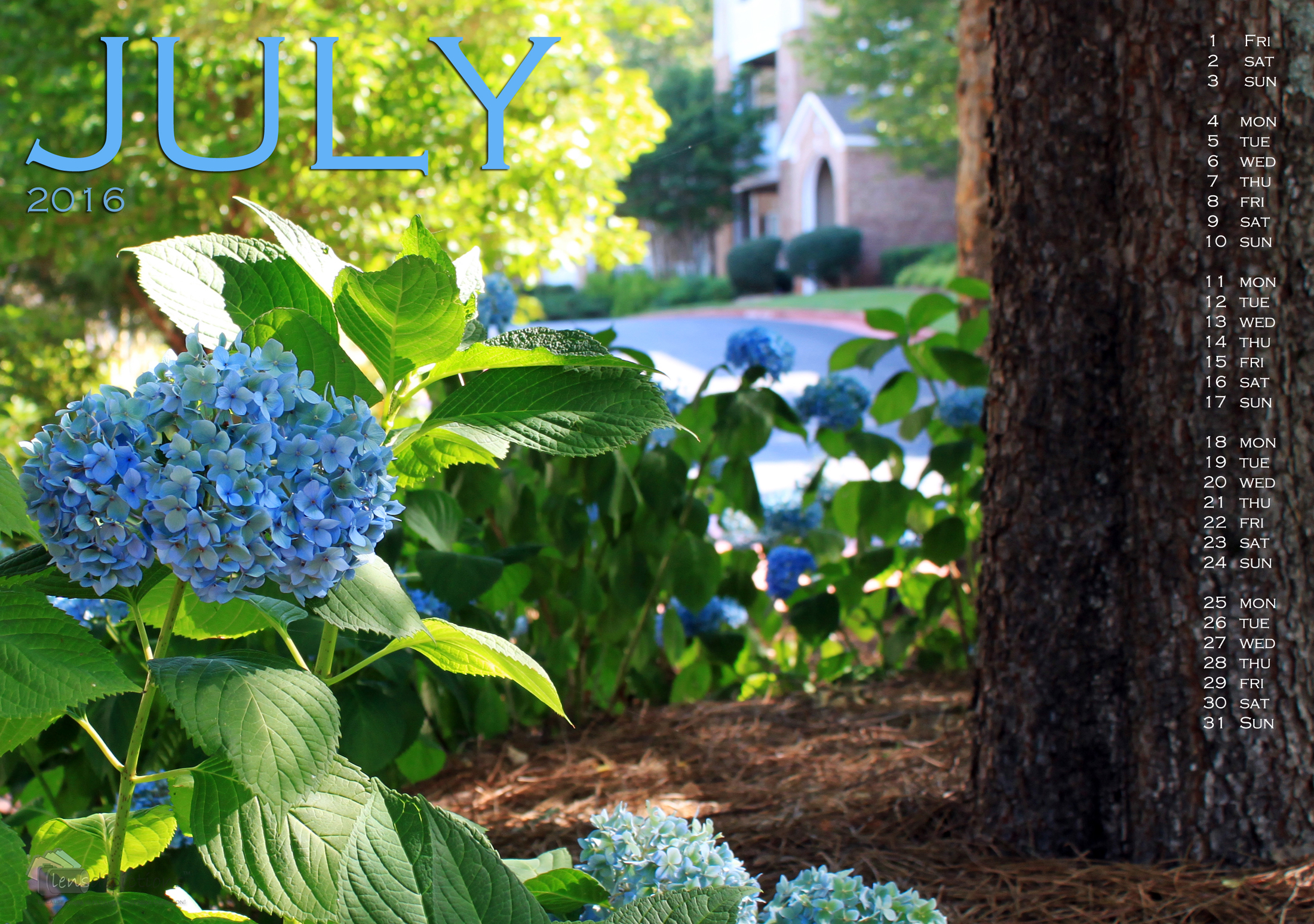 The magic of Hydrangeas – Nature's litmus papers!