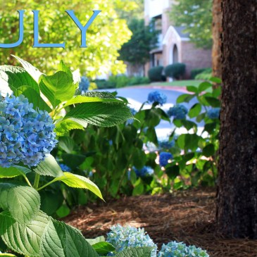 The magic of Hydrangeas – Nature's litmus papers!