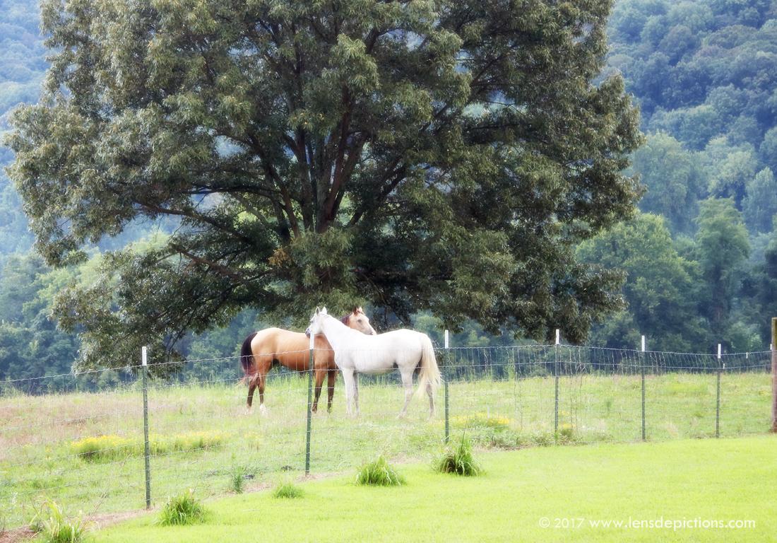 Horsefriends_Lensdepictions