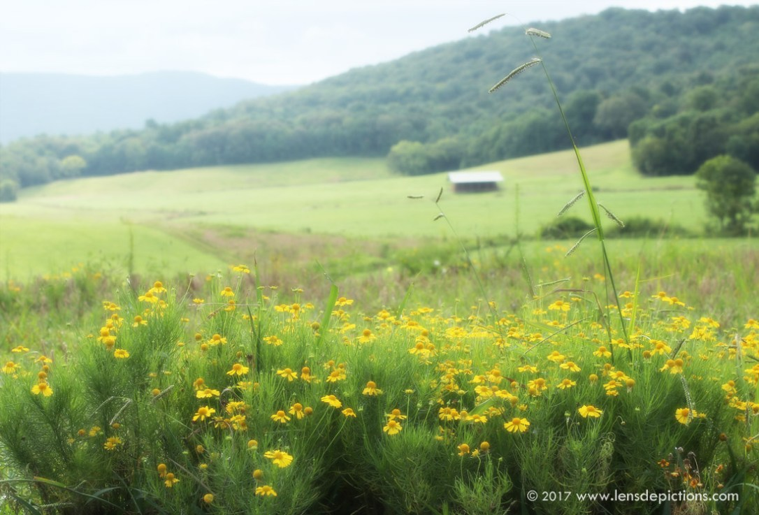 wildflowers_Lensdepictions2