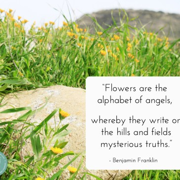 Benjamin Franklin spiritual quote about wildflowers with beautiful picture background!