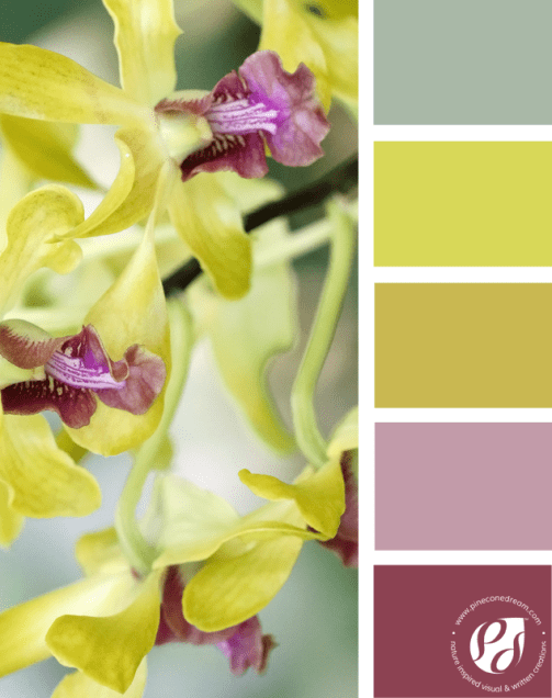 Color-palette-from-photos_delicateyellow_pineconedream