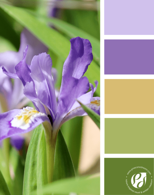 Color-palette-from-photos_iris_pineconedream2