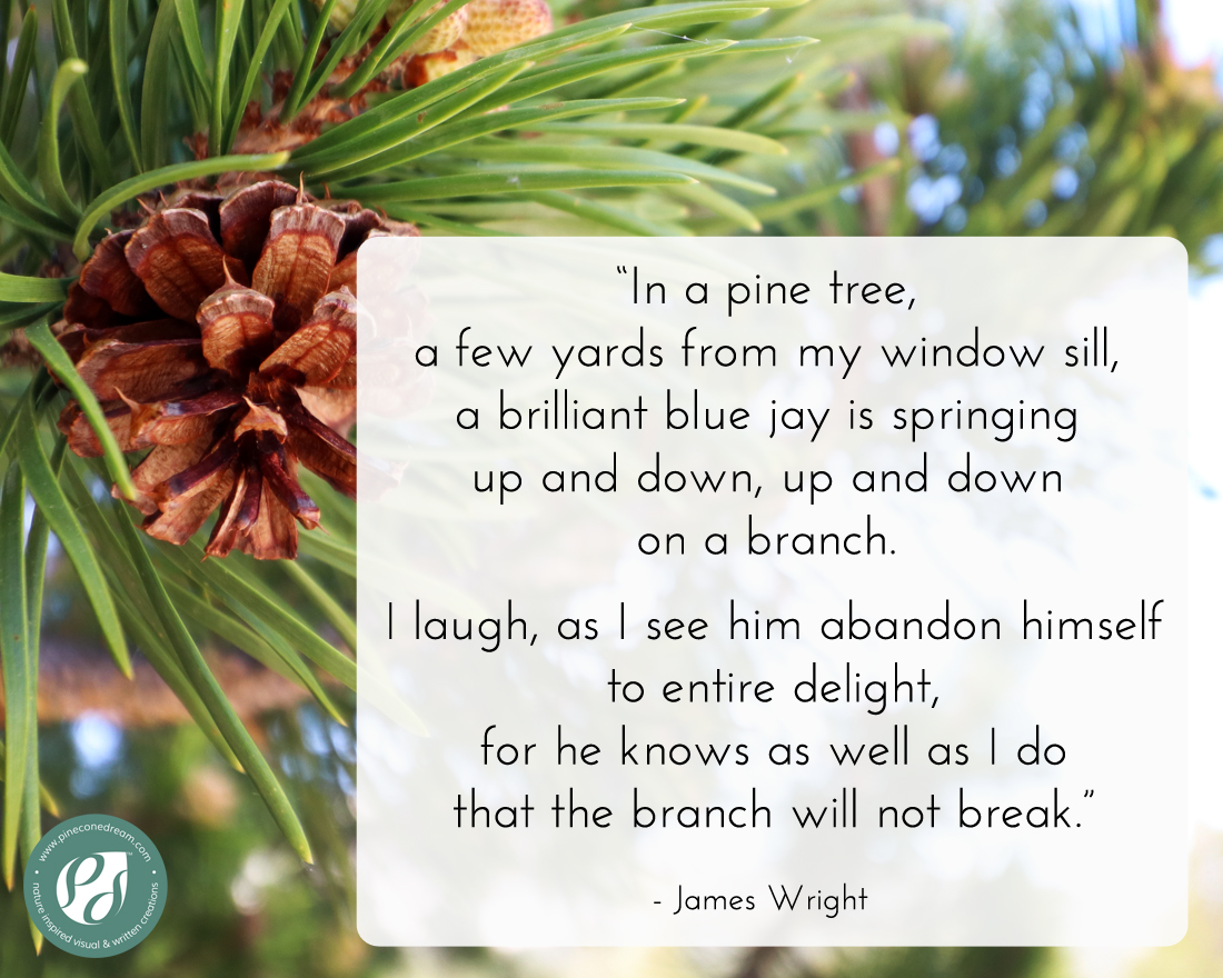 James Wright lines about pine tree