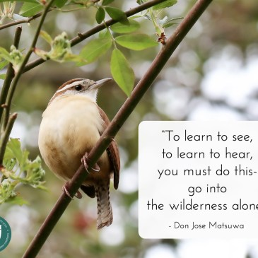 Wilderness quote by Don Jose Matsuwa, with nature background