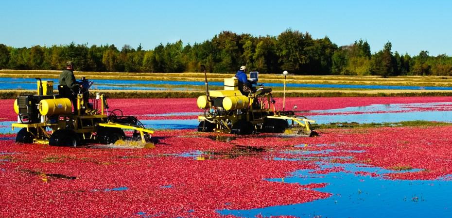 Cranberries-674