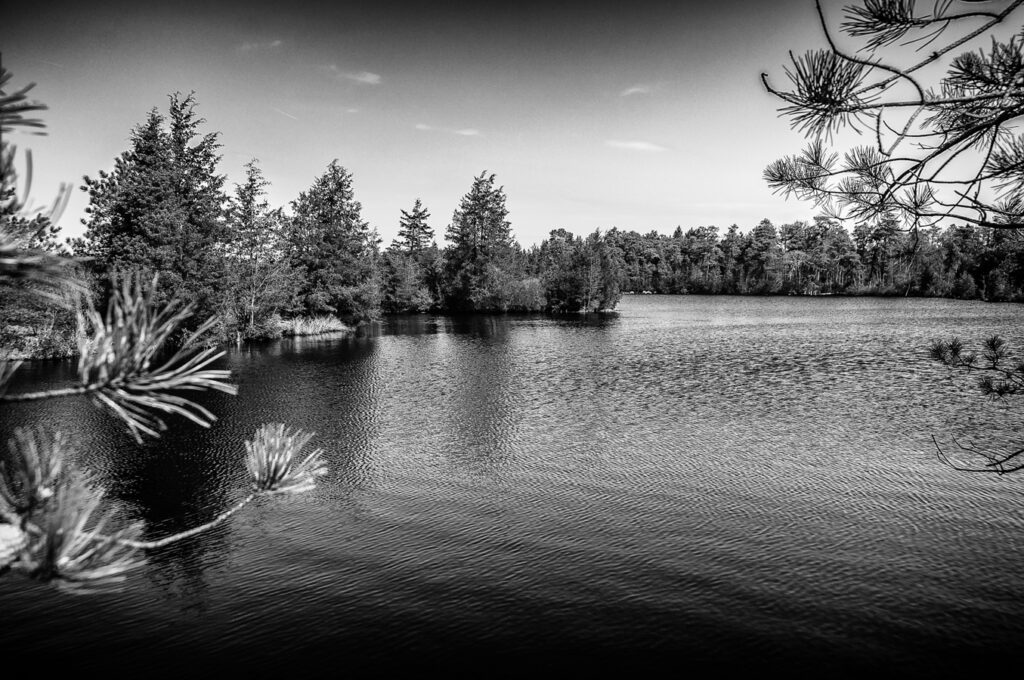 lost-pinelands-