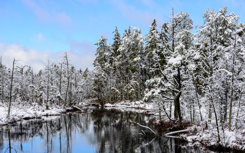 pine-lands-snow-5724
