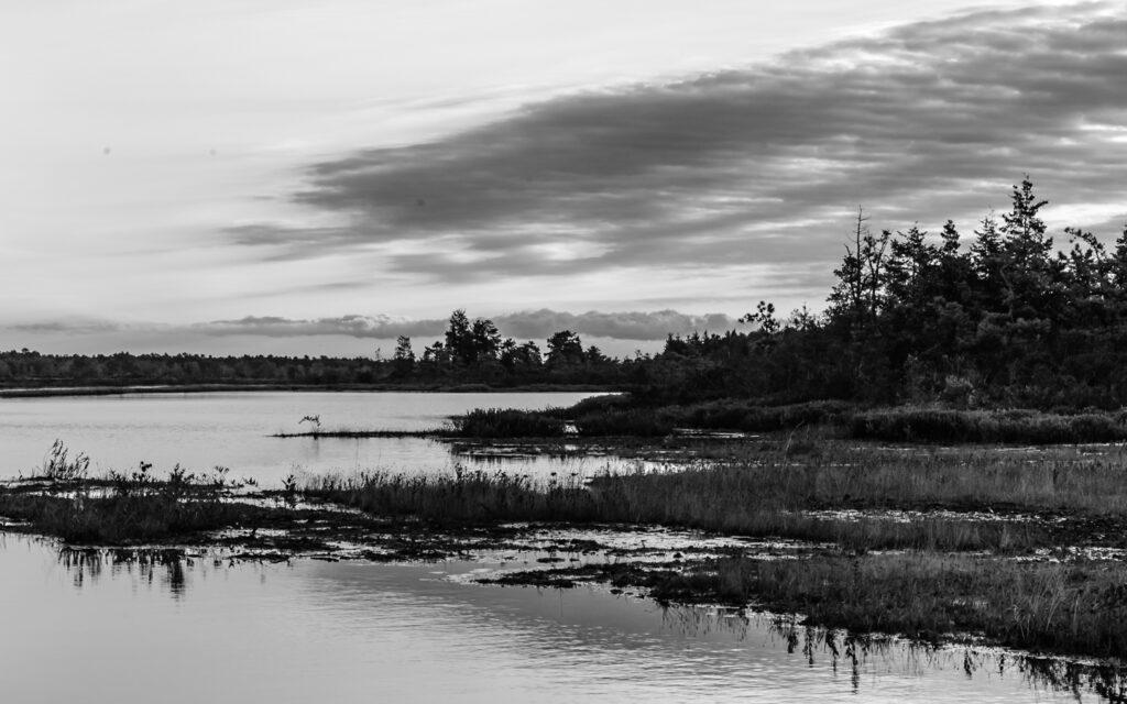 pinelands-whitebog-photo-0405