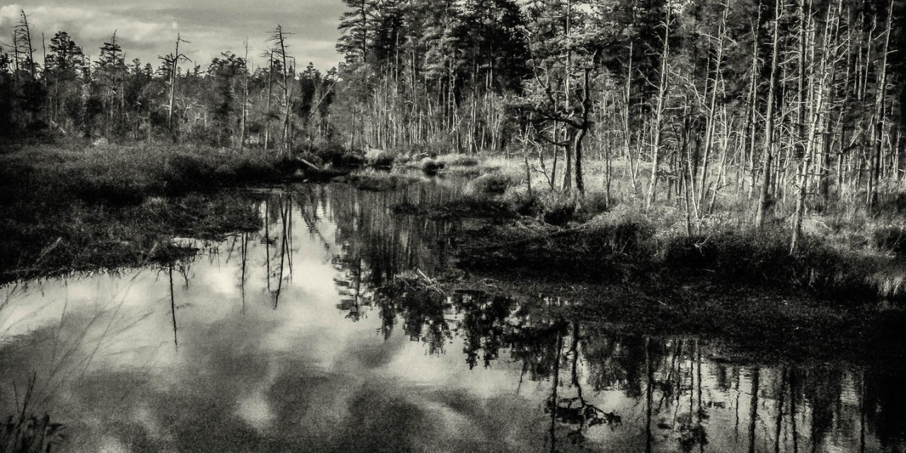 pinelands-b-w-photo