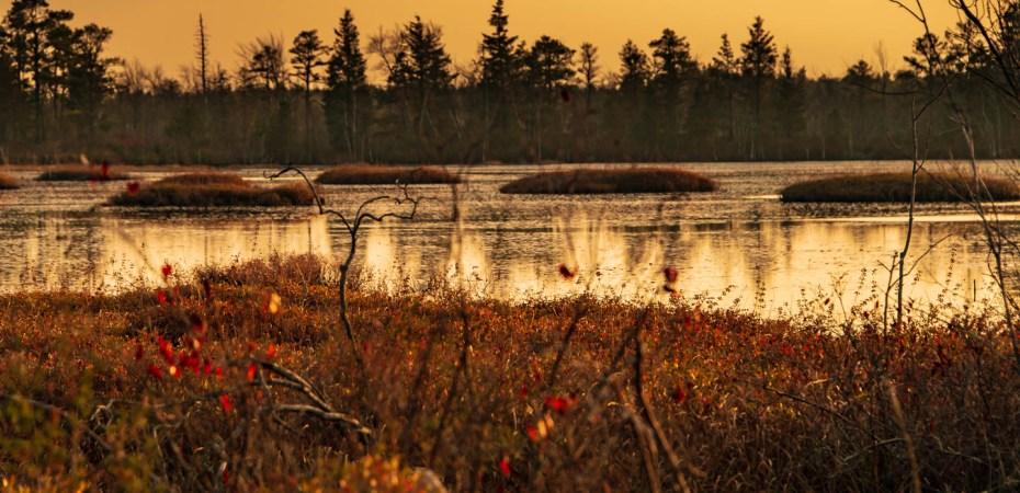 pinelands-landscape-photos-5616