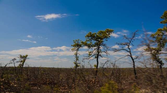 pygmy pines-plains-photos-
