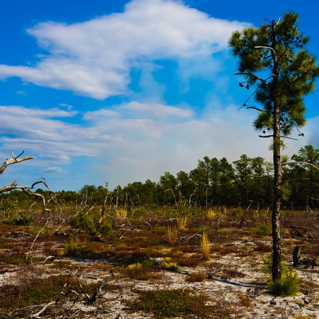 pygmy pines-plains-photos-7776