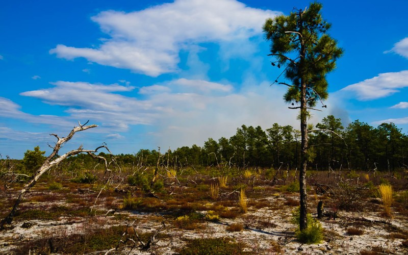 pygmy pines-plains-photos-7776