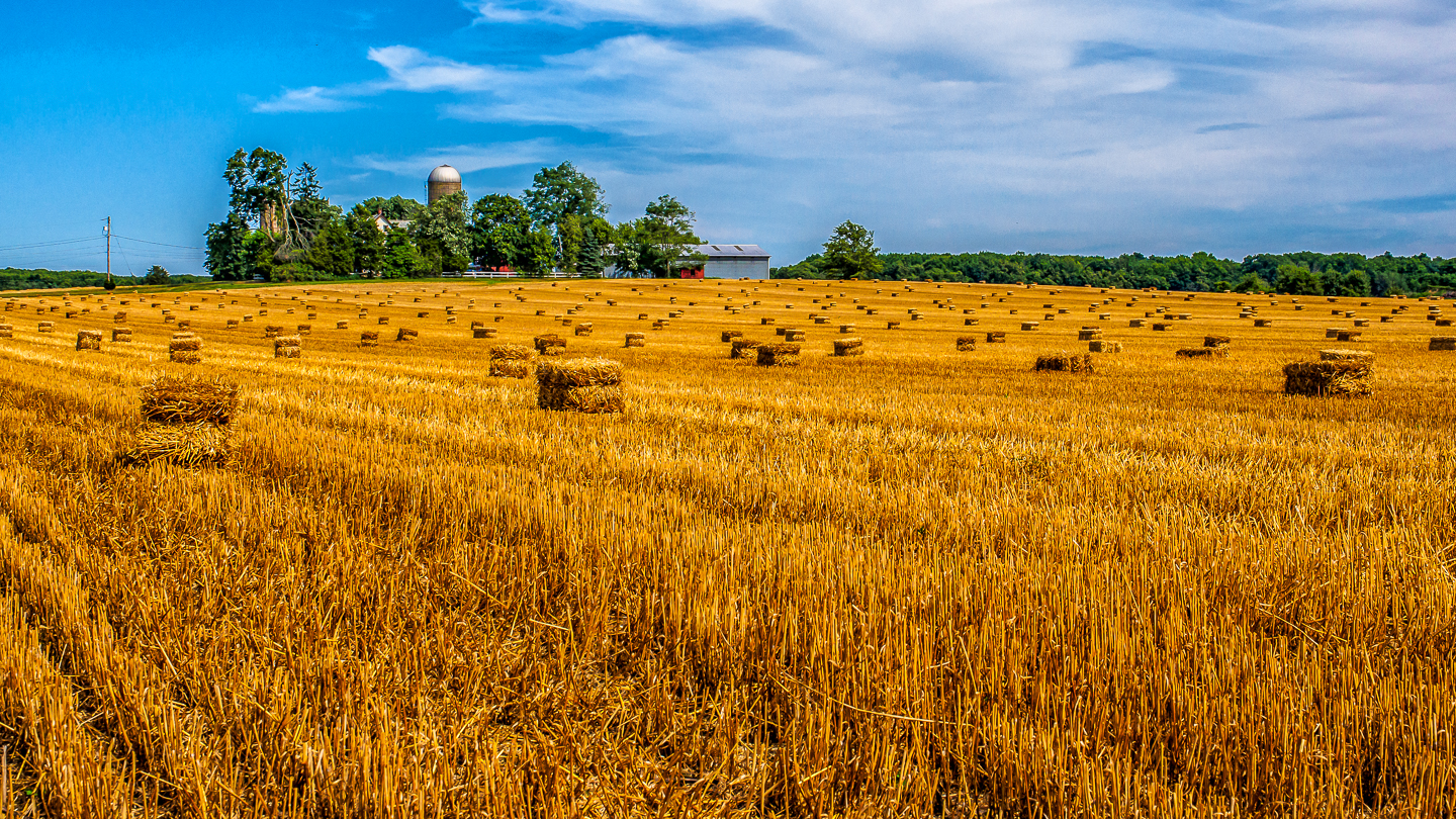 Golden fileds of Hay