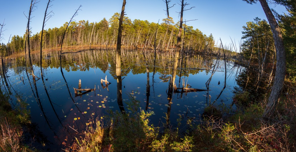 Showing the beautiful Pinelands of New Jersey