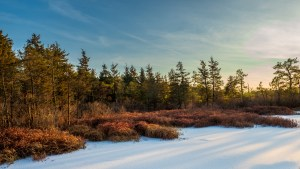 Photos of winter trees at whites bog