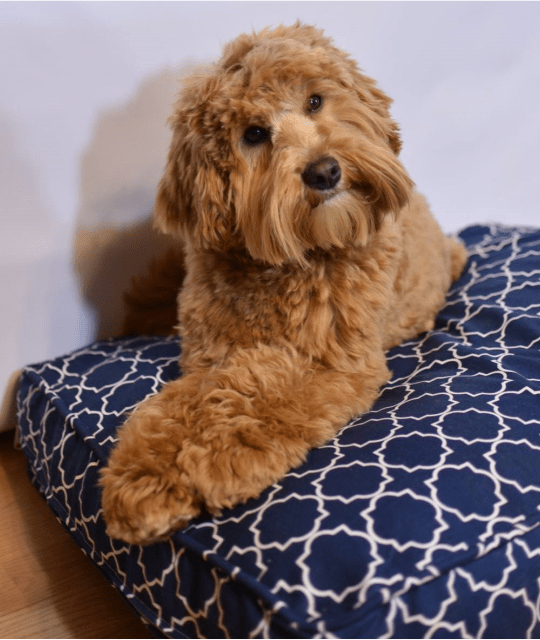 Molly Mutt Dog Bed Stuff Sack Pine Lodge Labradoodles