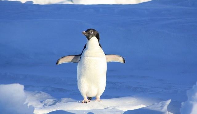 La pinguinalité est le surnom donné par les référenceurs à la pénalité que leur inflige Google pengouin.