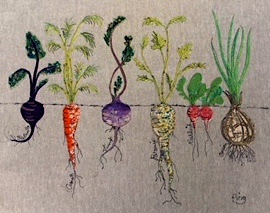 Root vegetables (large)