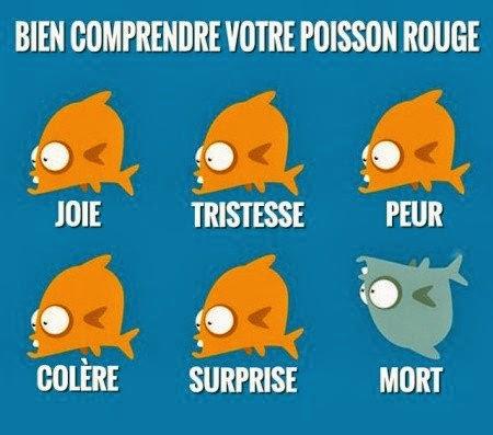 Les humeurs du poisson rouge