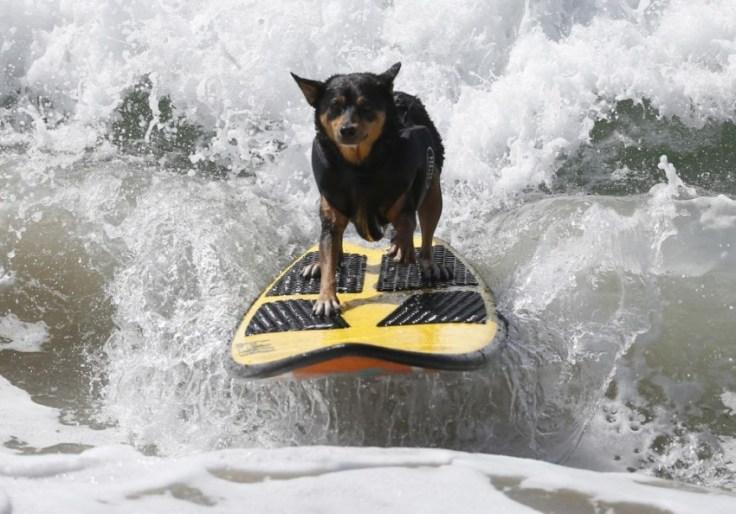 chien-en-surf_003