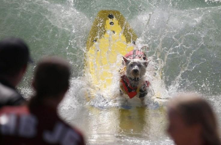 chien-en-surf_006