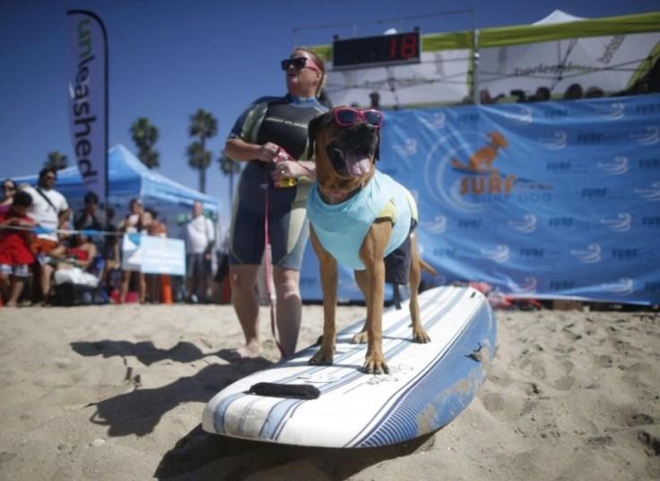 chien-en-surf_007