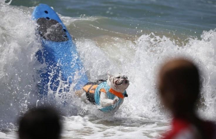 chien-en-surf_011