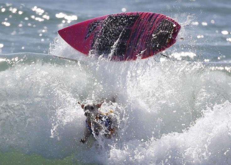 chien-en-surf_013