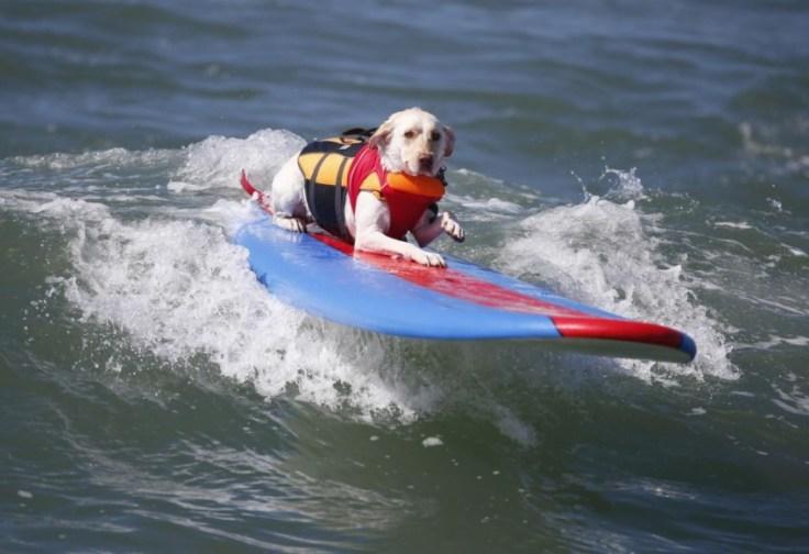 chien-en-surf_016