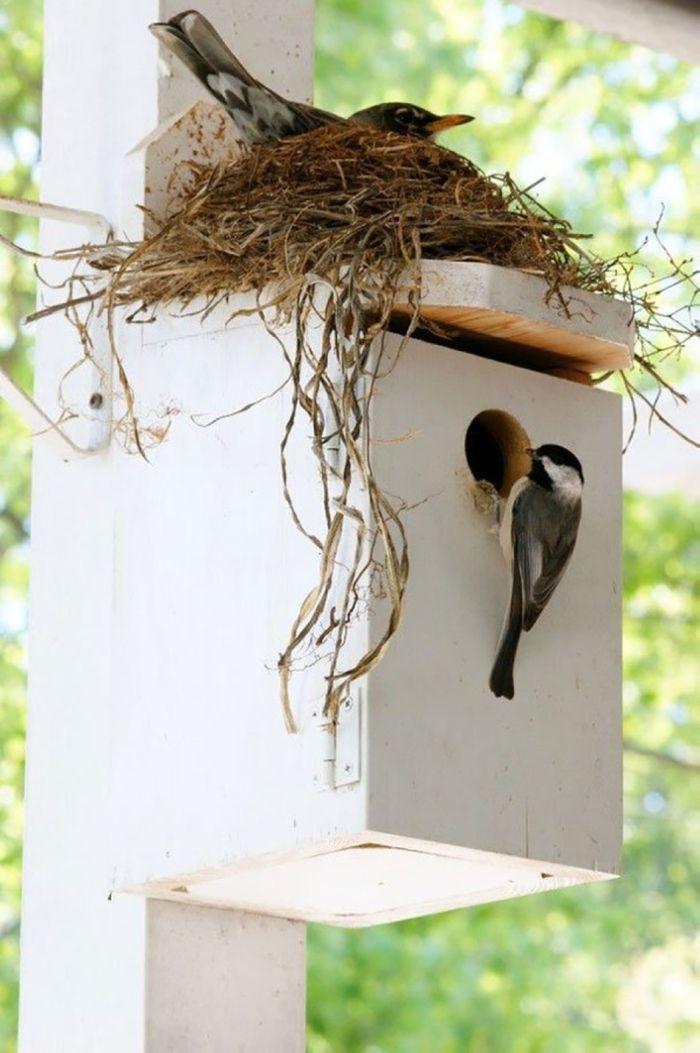 Птичьи гнезда в необычных местах