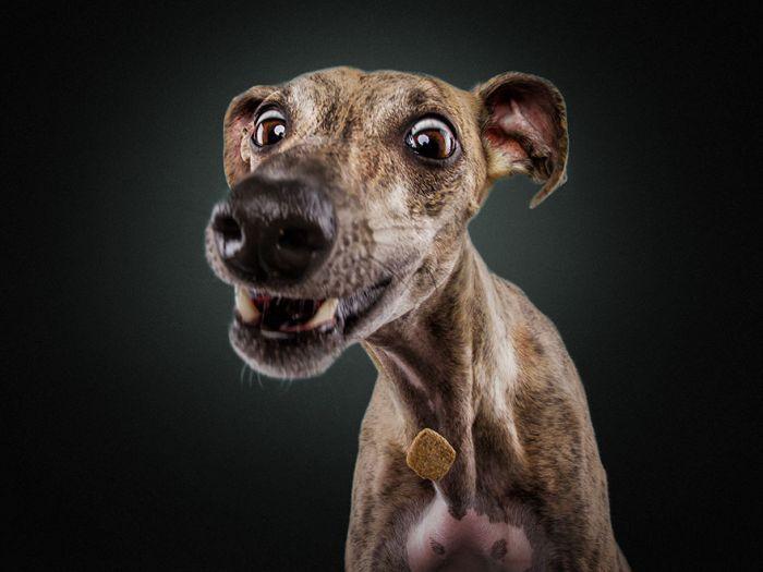 Стоп-кадр Собаки (30 фото)