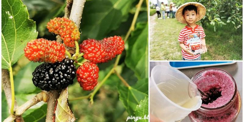 彰化一日遊 樂農發休閒農場 親子採果趣 桑葚葉不只蠶寶寶能吃 也能泡茶唷~