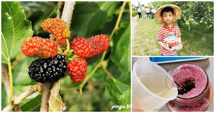 彰化一日遊|樂農發休閒農場 親子採果趣 桑葚葉不只蠶寶寶能吃 也能泡茶唷~