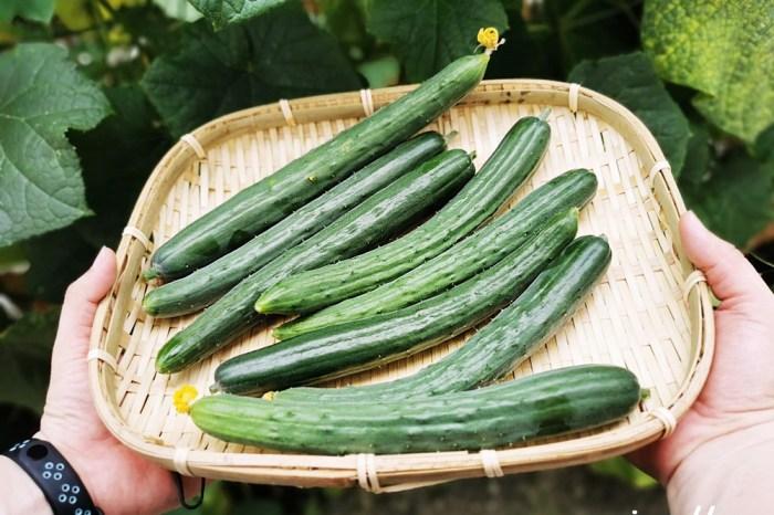 彰化一日遊|綠寶禾農園 溫室友善耕作 小黃瓜採果樂