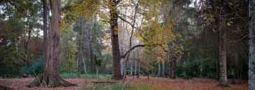 Conjunto de Árvores do Tremelgo