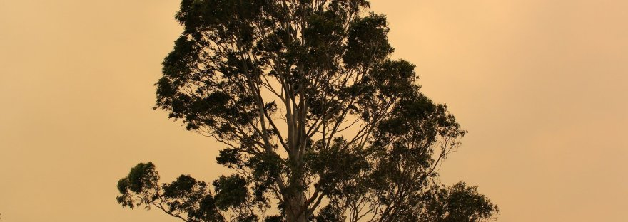 bushfire tree smoke