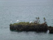 Redshank island  - at the bottom of the garden :)