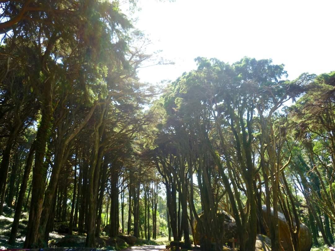 parc-naturel-sintra