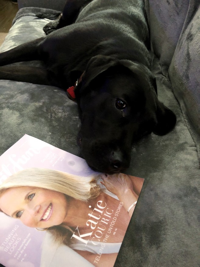 Parker, Black Labrador Retriever - Pink Bows & Twinkle Toes