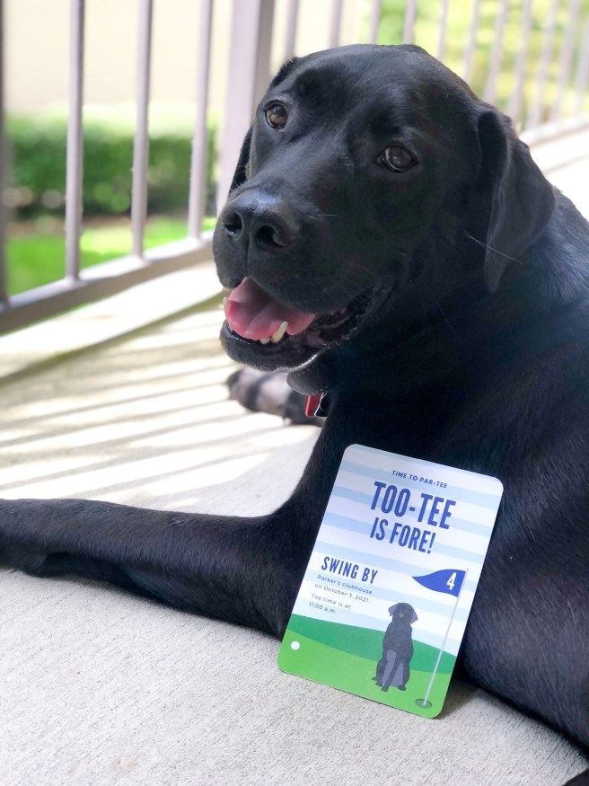 Black Lab with Party Invitation - Pink Bows & Twinkle Toes