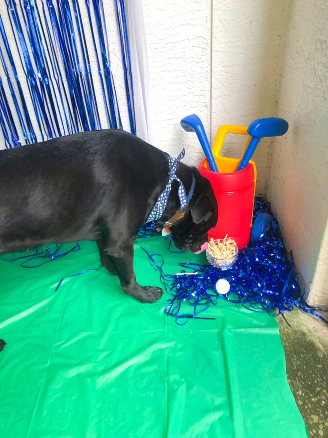 Black lab with birthday party photo backdrop - Pink Bows & Twinkle Toes