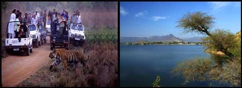 the-safari-tourism-will-shine