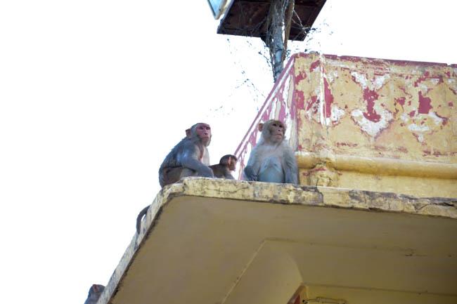 jaipur-121