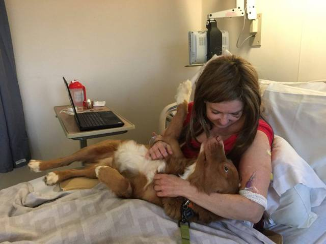 Riley of Red Shadow Tollers is also a cancer survivor.  He came to the hospital to give me a paw of support.