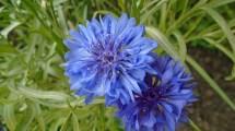 flower-1349171_640