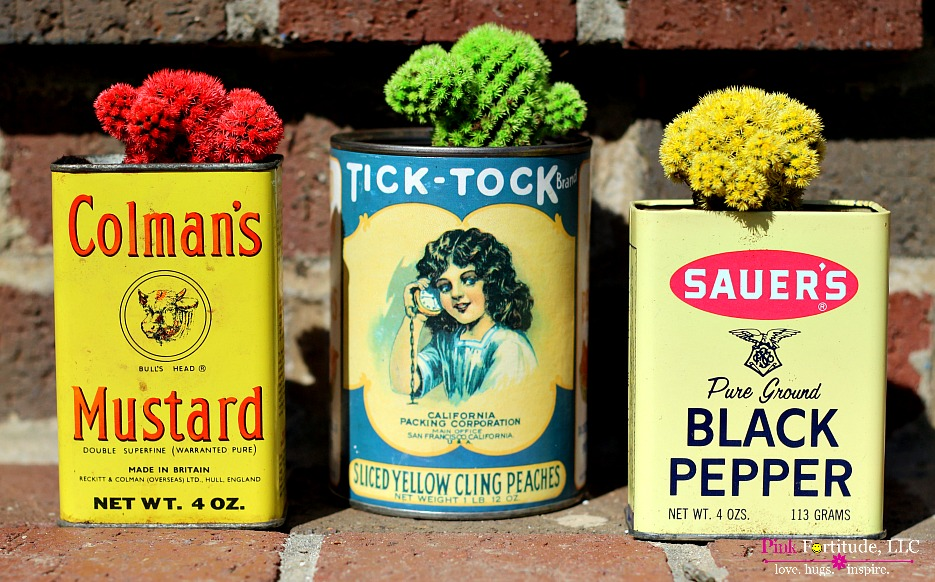 Vintage Tins and Cactus Succulents