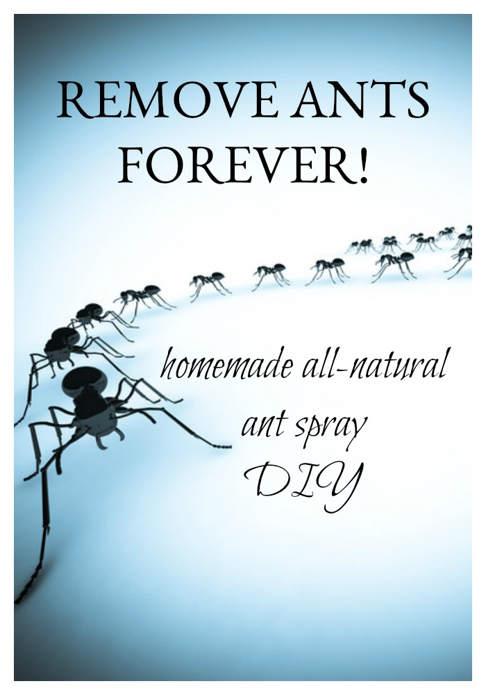 It's that time of year. The ants go marching one by one. All of your kitchen! You want to get rid of them, but not at the expense of toxic chemicals. And those bait traps never work. This DIY for homemade all-natural ant spray is quick and easy to make. It doesn't kill the ants. But it will help to eliminate them forever.